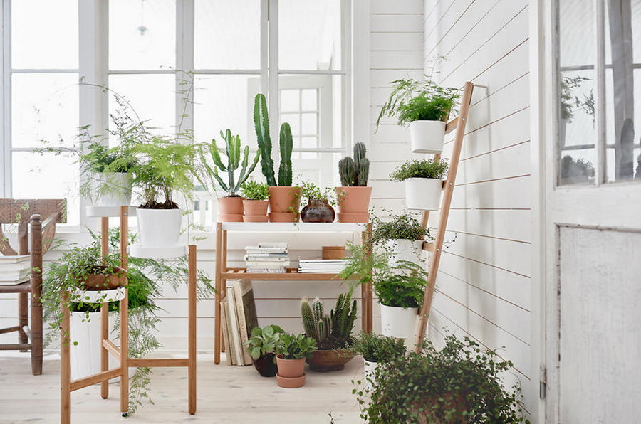 Design a garden in a house with pots and wooden shelves