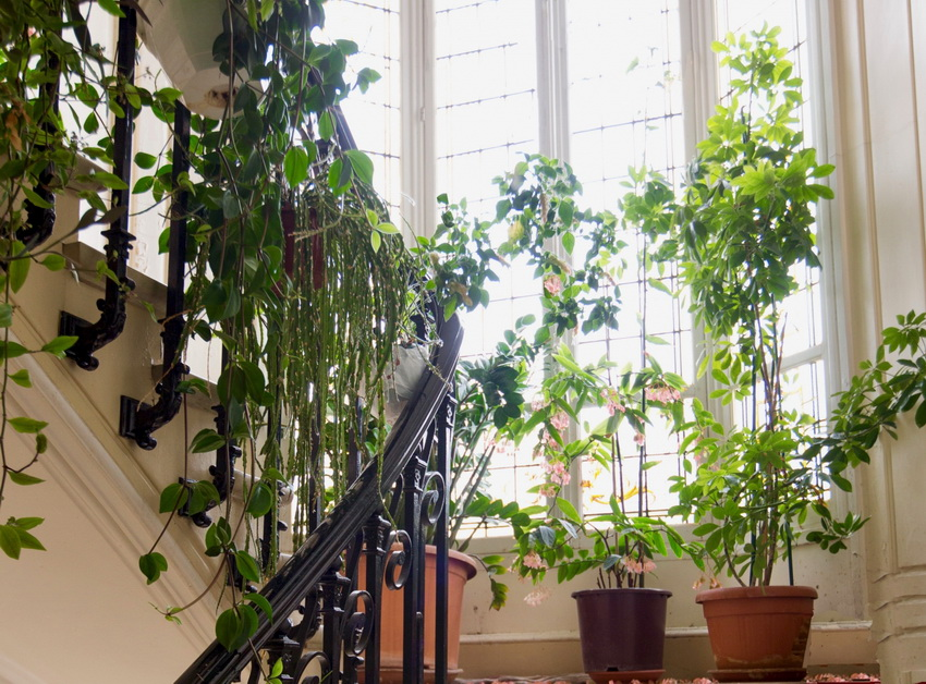Stair Bordes with Plants