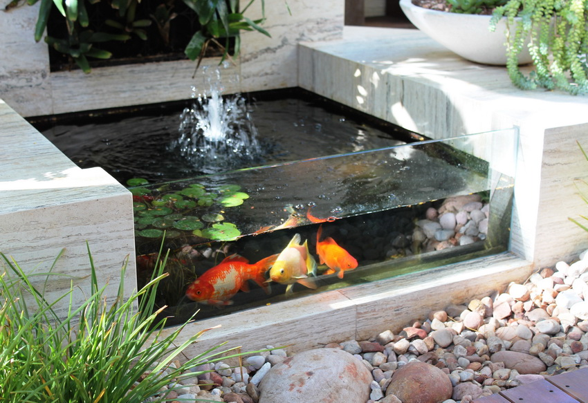 semiquarium fish pond design